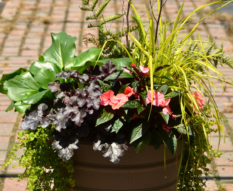 three season container planting from Mischler's in Williamsville