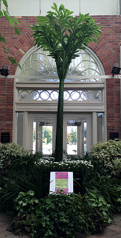 eafing corpse flower from Buffalo Botanical Gardens Oct 2014