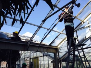 glass missing from Botanical Gardens in Buffalo