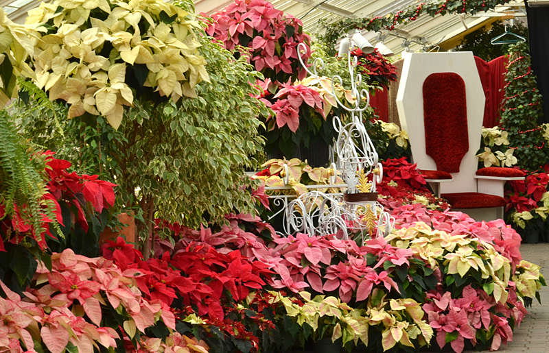 poinsettia decorations 2014 at Buffalo Botanical Gardens