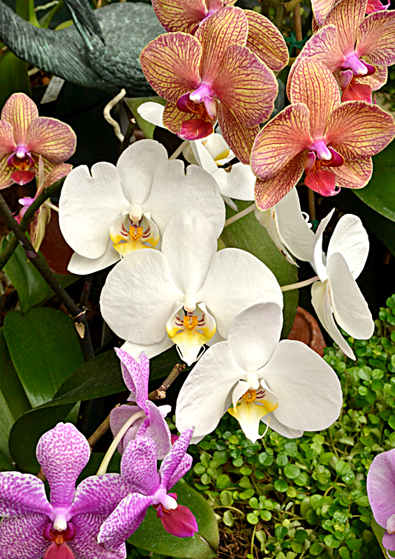 various orchids at Botanical Gardens