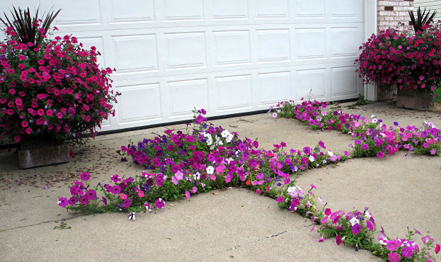 Lush Flower Garden Grows From Cracks In Concrete Driveway