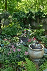 hosta and astilbe in shade garden in Hamburg NY
