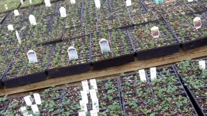 sprouts at Mischler's Florist and Greenhouses