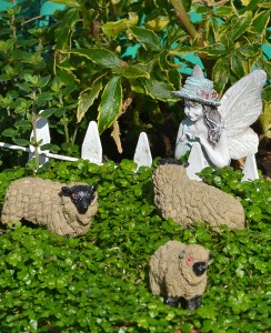 baa baa black sheep miniature garden at Mischler's Williamsville