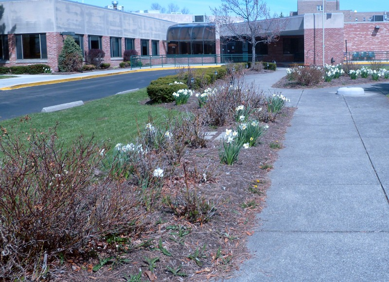 garden at Schofield Residence in Tonawanda NY