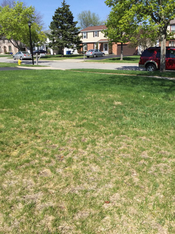 lawn problem from Martha Neri of Williamsville NY