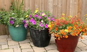 patio pots from Mischler's