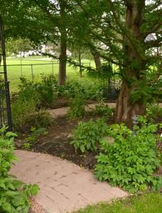 path in garden around tree in Amherst NY