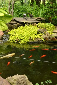 pond in Amherst NY