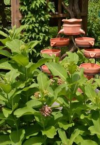 milkweed and fountain in Buffalo NY garden