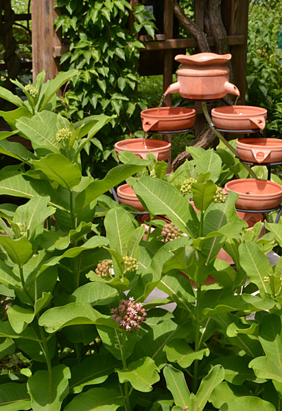 milkweed and fountain in Buffalo NY garden