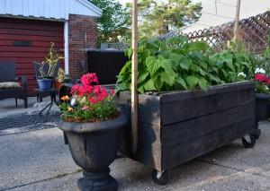 planter on castors from palletes in Buffalo NY