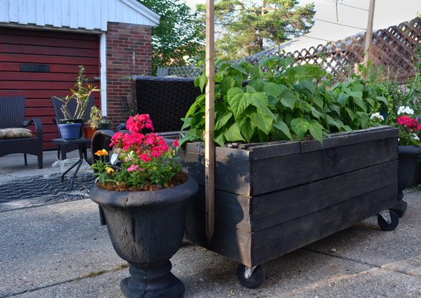 planter on castors from palletes in Buffalo NY