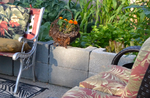 Are cinder blocks OK for vegetable gardens? Answers to that