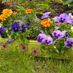 wooden box holds annuals in Lockport