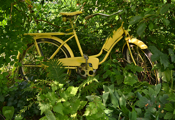 yellow bike as garden art in Lockport NY