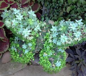 butterfly arrangement of succulents