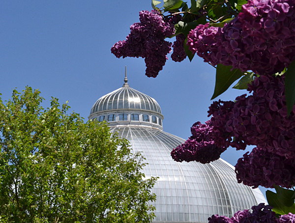 lilacs and dome at Buffalo and Erie County Botanical Gardens