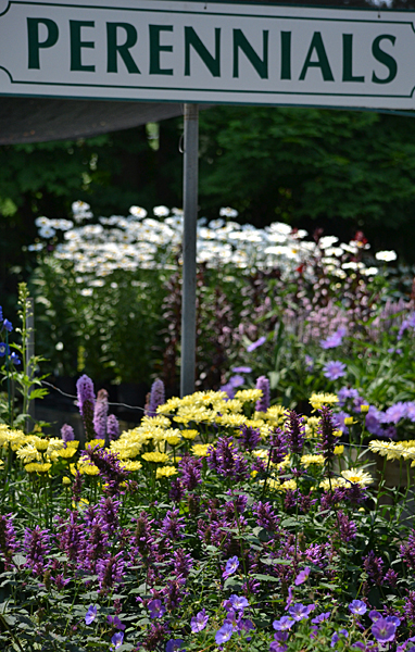 displays of perennials at Mishler's