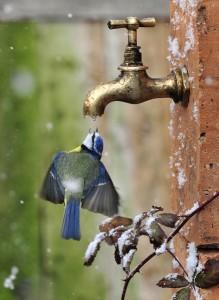 bird getting drop of water