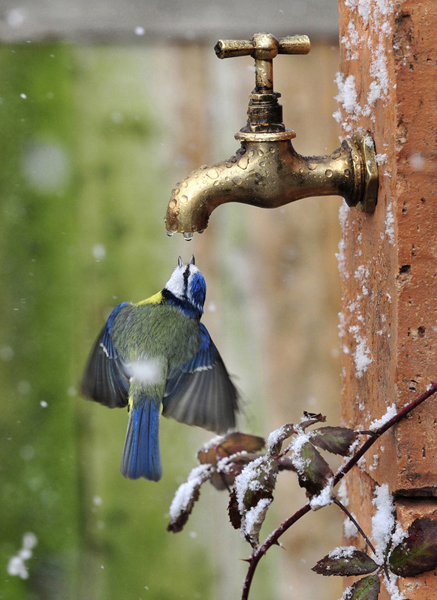 bird getting drop of water