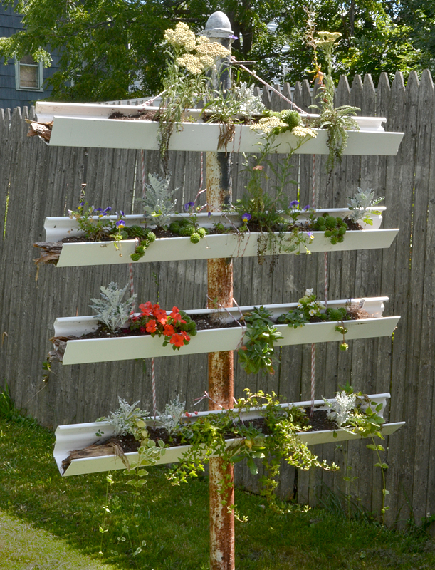 Vertical Garden Made From Old Gutters Draws Attention On