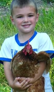 boy holding a Rhode Island Red hen