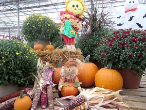 fall decorations at Goodman's