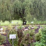 new Healing Garden at Buffalo Botanical Gardens by Stofko