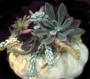 white pumpkin centerpiece with succulents