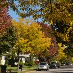 street trees in autumn in Western New York by Stofko