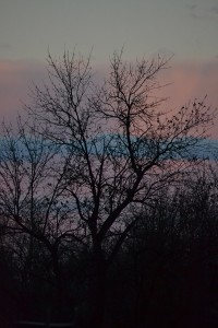 autumn trees at sunset South Park in Buffalo