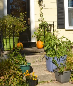 containers on steps growing vegetables