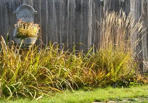 perennials in autumn garden