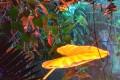 Lumagination at Buffalo Erie County Botanical Gardens