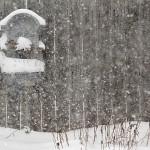 snow in Amherst garden
