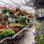 Waterman's Greenhouse in Springville NY
