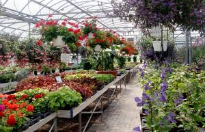 Waterman's Greenhouse in Springville NY
