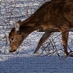 deer eating in winter
