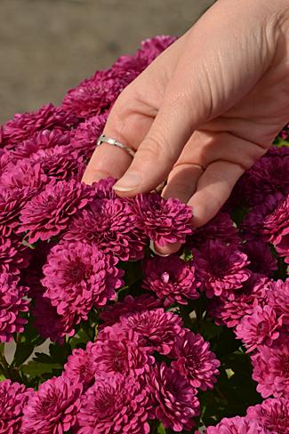 Master Gardener training set in Fredonia; deadline to register is April 29