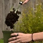 photo illustration of soil