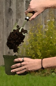 photo illustration of soil