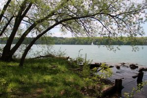 Stella Niagara Preserve