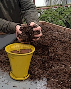 putting soil into pot