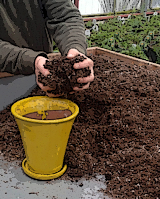 putting soil into pot