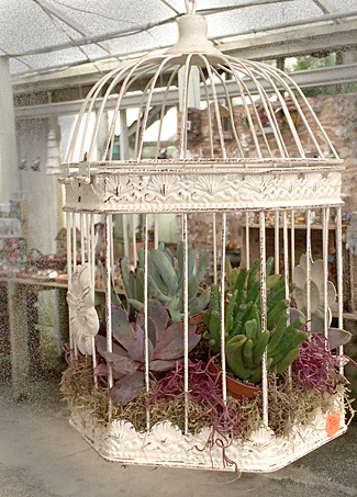 succulents in bird cage