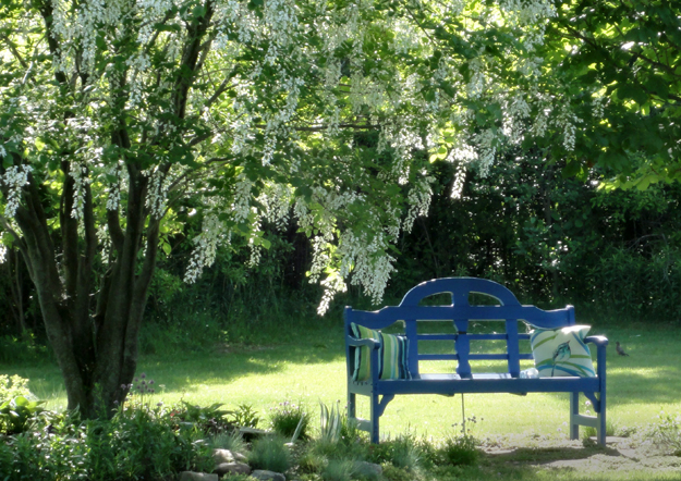 yellowwood tree and bench in Grand Island, NY