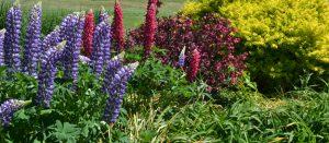 garden outside at Buffalo and Erie County Botanical Gardens