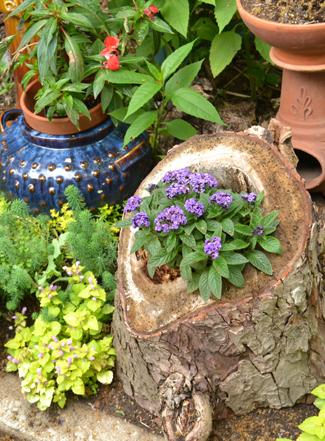 flower in log